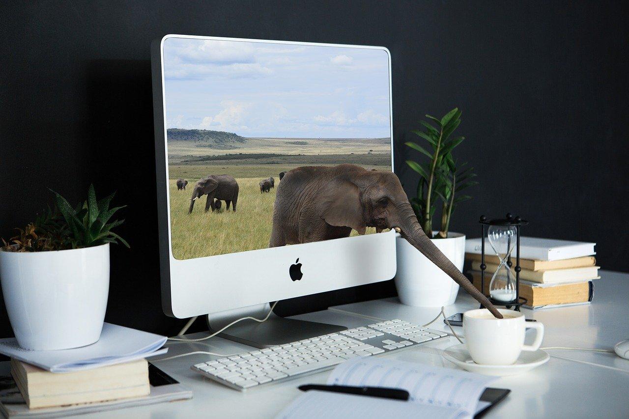 Photoshop(フォトショップ)、illustrator(イラストレーター)…使い分け、できてますか?